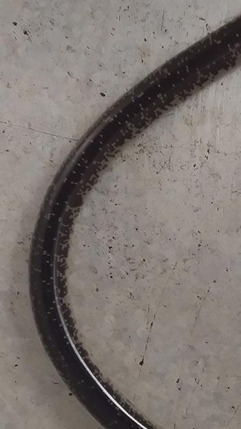 Sodwana Bay Information.co.za - Schlegel's beaked blind snake - Pattern