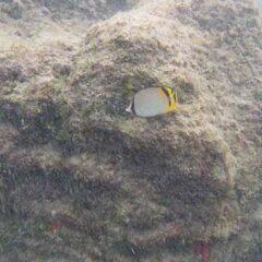 Sodwana Bay-Sodwana Scuba diving-Sodwana Fishing and Sodwana Camping (32)